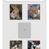 Скриншот Cat Puzzle – Изображение 1