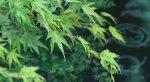 Сад изящных слов | Kotonoha no Niwa - Изображение 7
