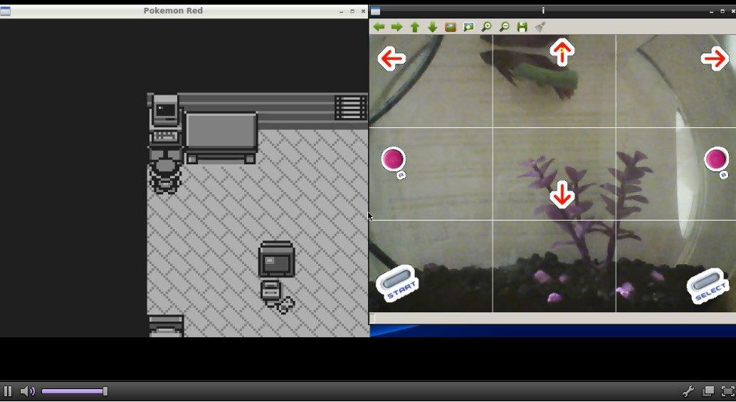 Аквариумная рыбка проходит Pokemon через Twitch - Изображение 1