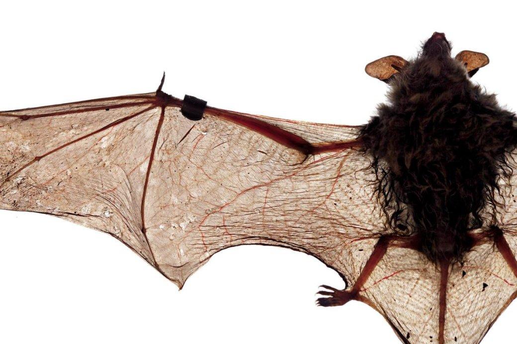 Хэллоуин еще некончился: лучшие фотографии летучих мышей отNatGeo - Изображение 6