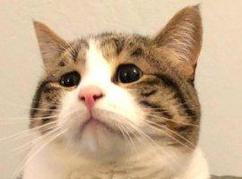 Мем про кошку иплюшки переделывают под все насвете. Получается смешно (новсе еще грустно)