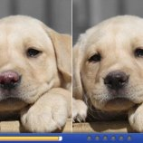 Скриншот Spot the Difference! 2 – Изображение 2