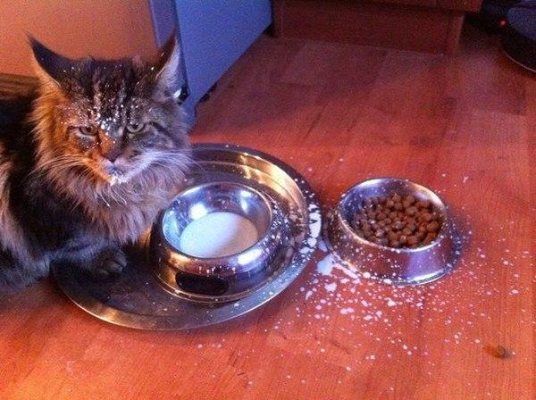 Ненависть, грусть, безысходность и коты. Вспоминаем самые забавные фотографии ко дню кошек!. - Изображение 12