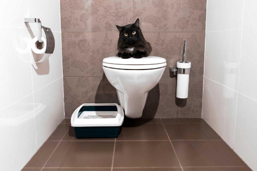 Что застранный запах? Это авторы игры «ЕСТЬ ДВА СТУЛА» выпустили вSteam симулятор туалета | Канобу - Изображение 0
