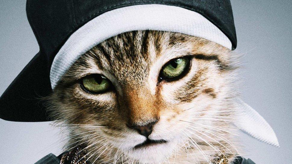 вид коты в кепках картинки отель