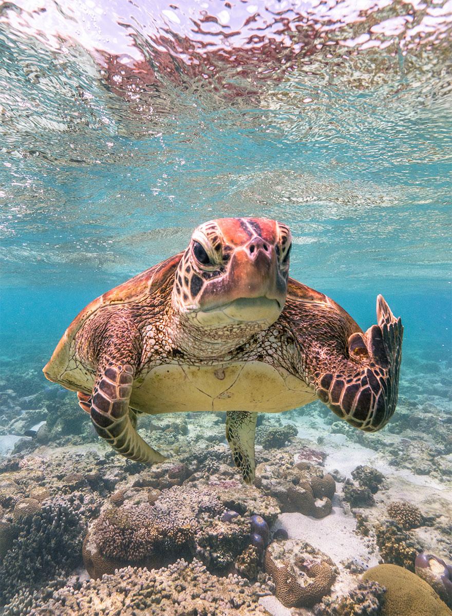 Позитивная галерея: 40 фото сконкурса насамый смешной снимок дикой природы   Канобу - Изображение 3958