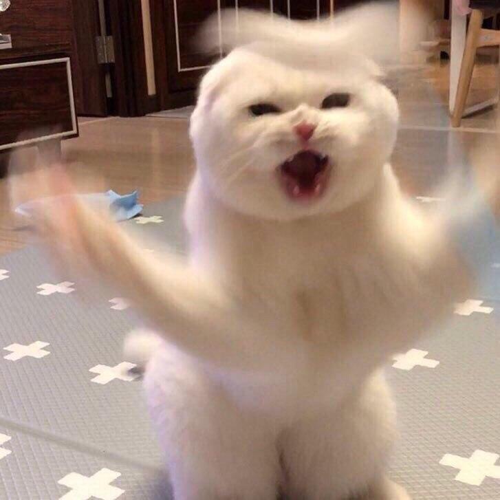 Ненависть, грусть, безысходность и коты. Вспоминаем самые забавные фотографии ко дню кошек!. - Изображение 25