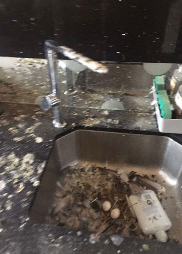 Британские голуби месяцами терроризировали комнату уехавшего студента | Канобу - Изображение 14886